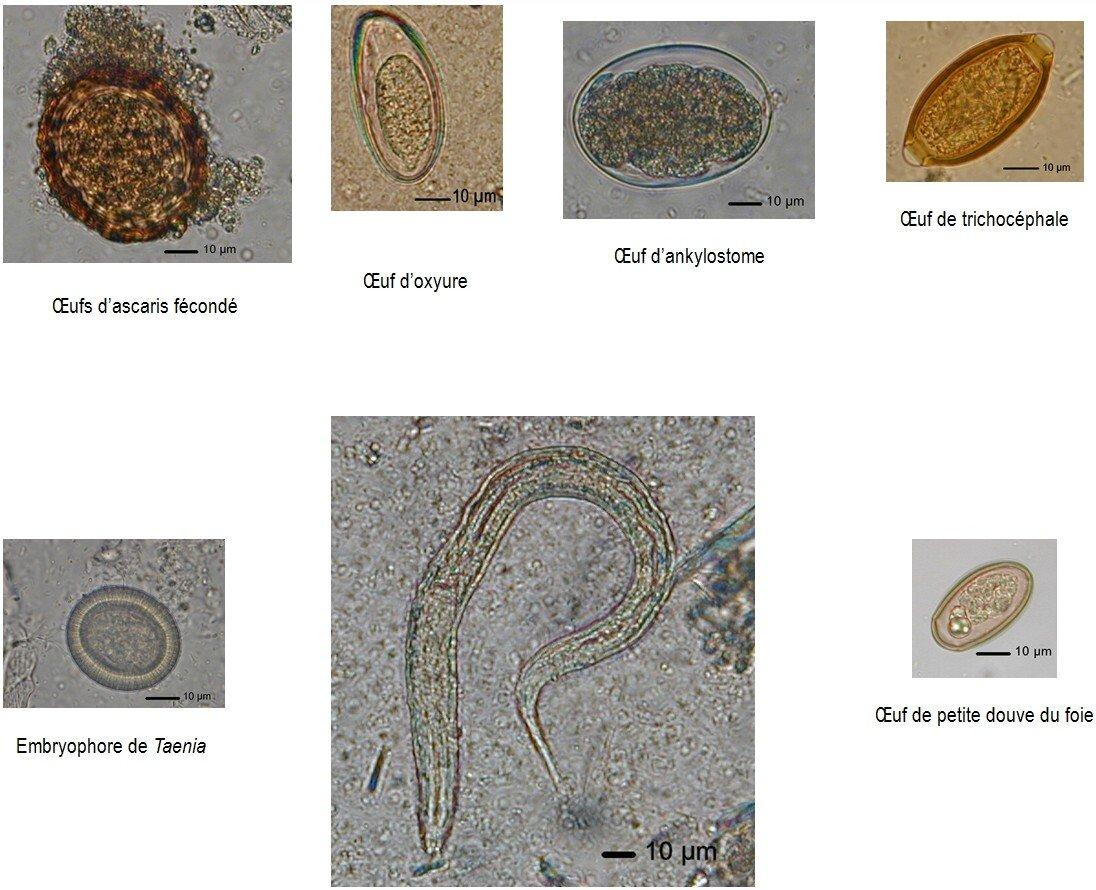 planche éléments parasitaires