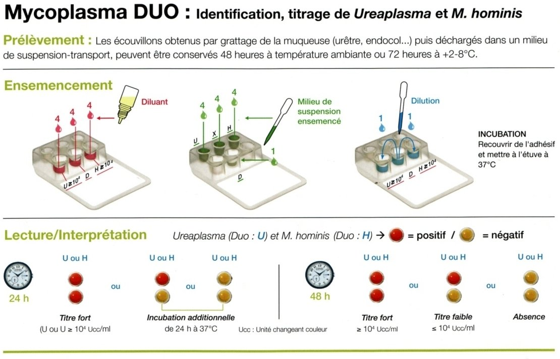 mycoplasma duo