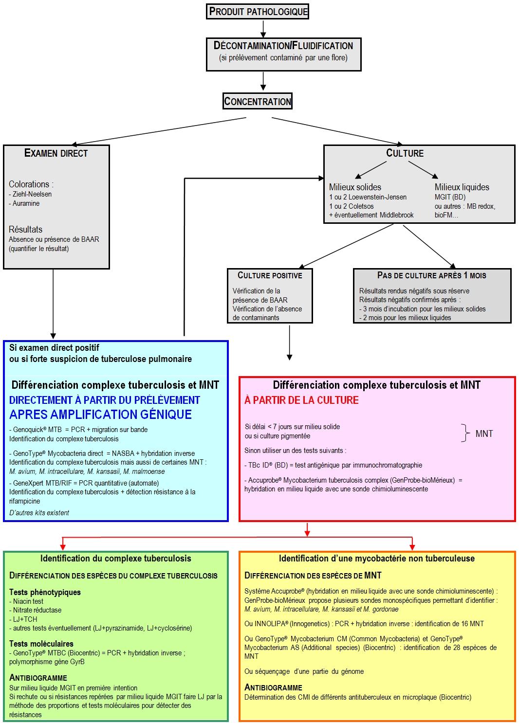 mycobactéries diagnostic
