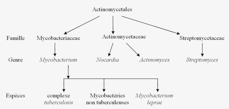 classification des mycobactéries