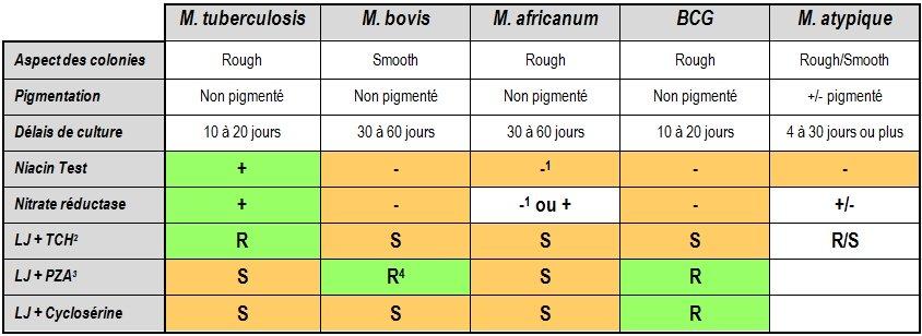 identification des mycobactéries