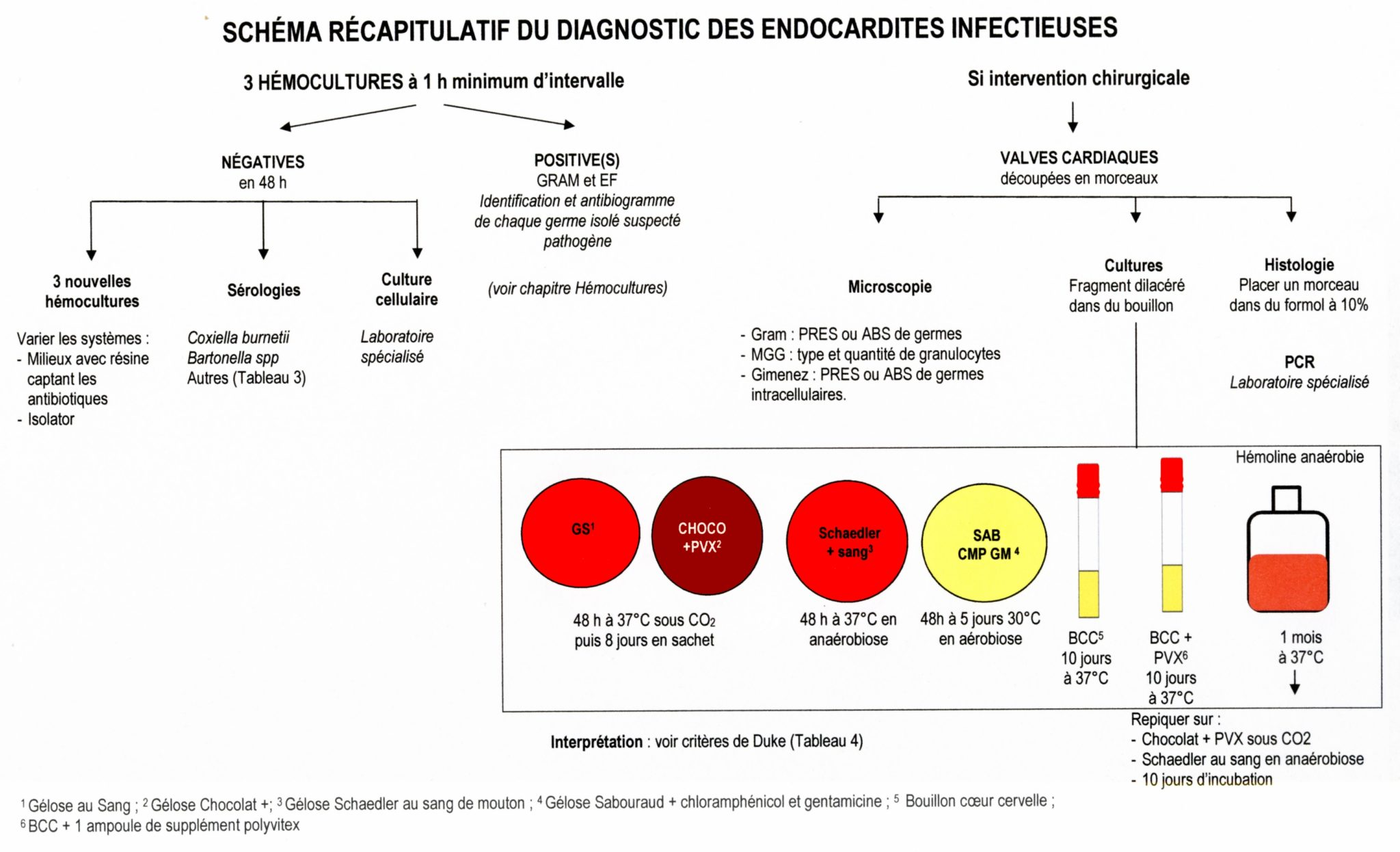 endocardites