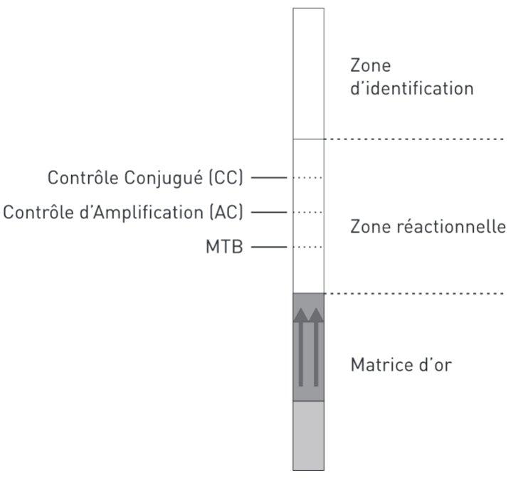 Test Genoquick MTB