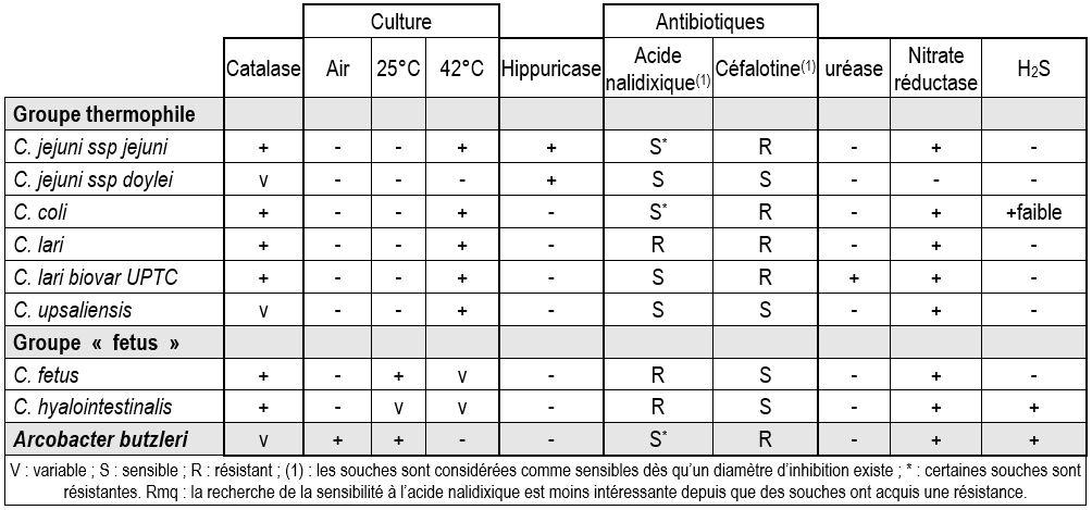 identification des campylobacter