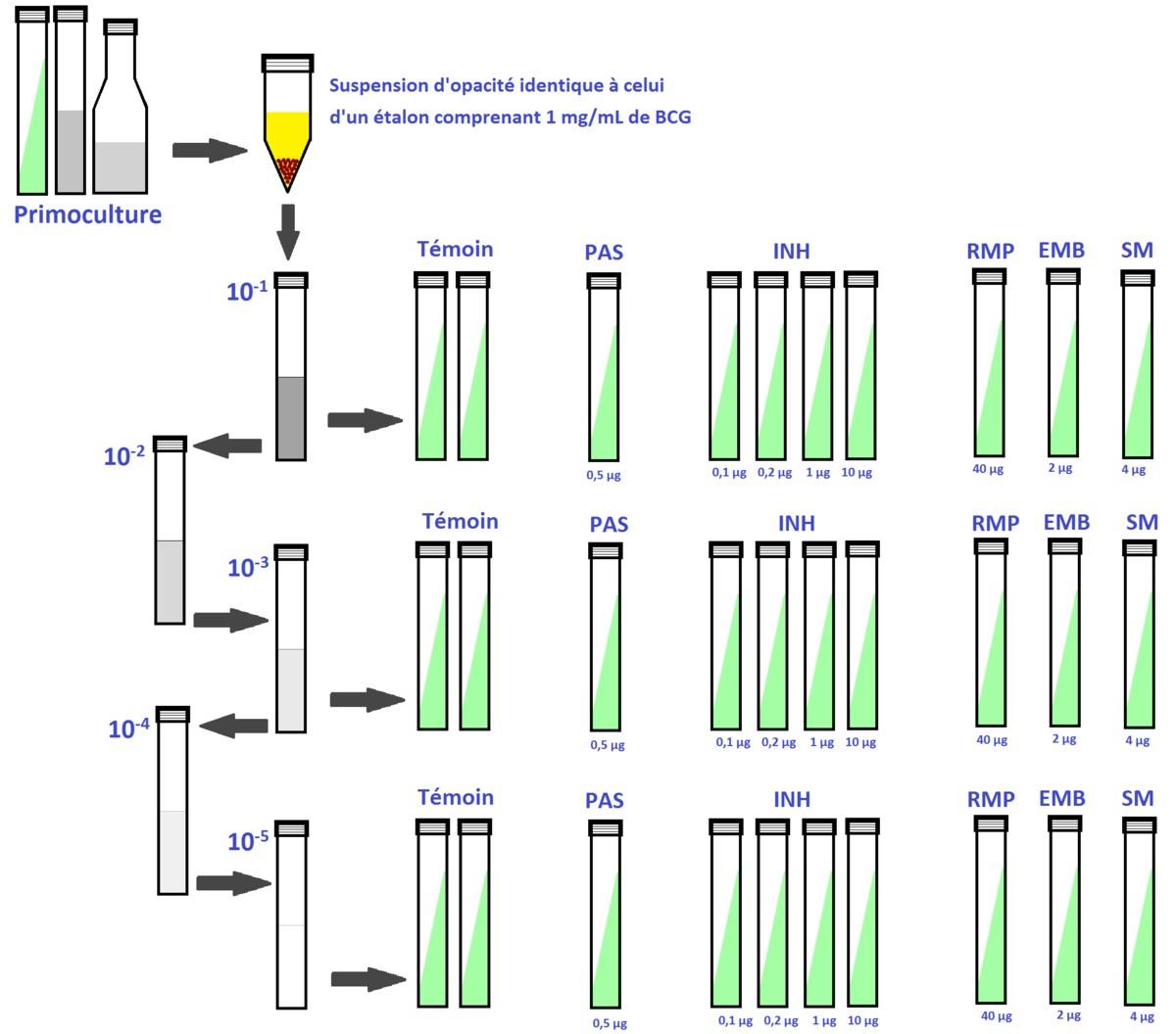antibiogramme des mycobactéries