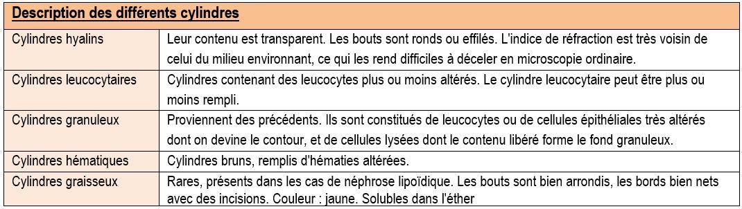 description des cylindres urinaires