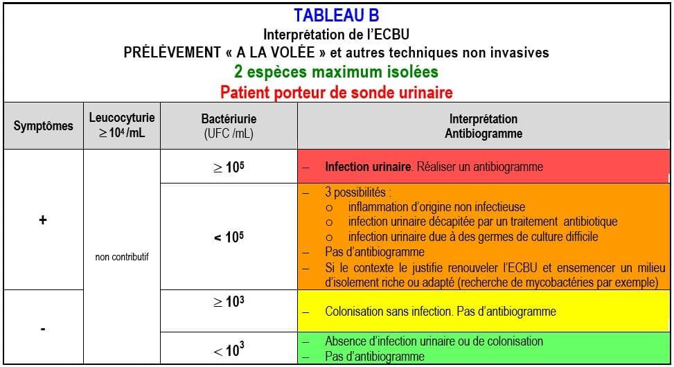 ECBU interprétation