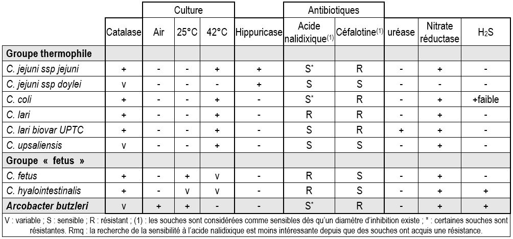 identification des campylobacter