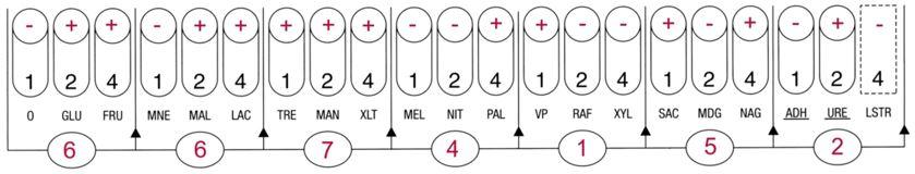 Profil API STAPH Staphylococcus saprophyticus