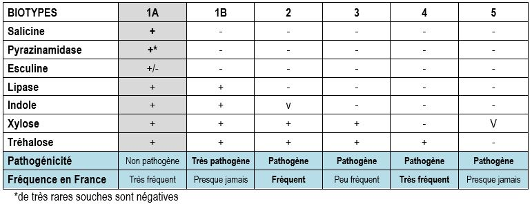 biotypage de yersinia enterocolitica