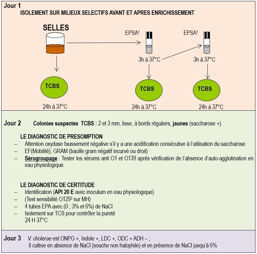coproculture recherche vibrio cholerae