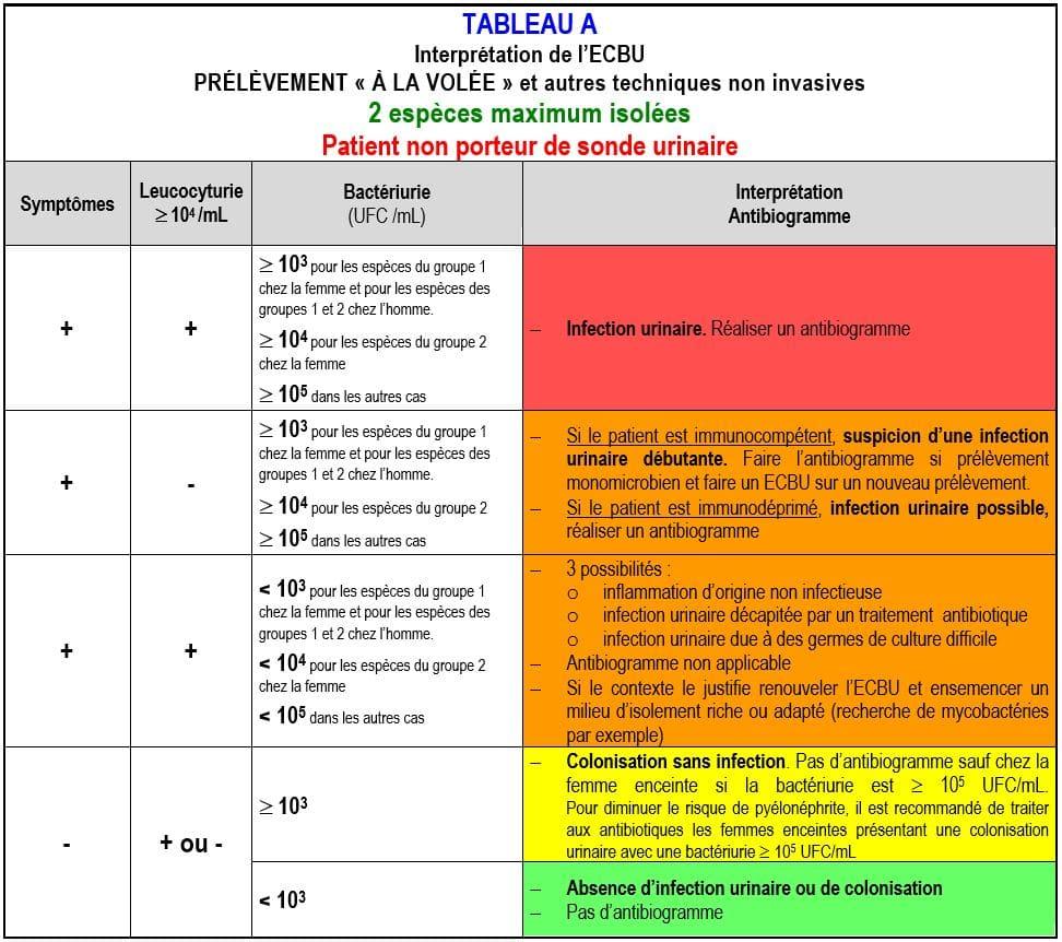interprétation ECBU