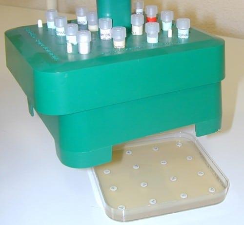 dépôt des disques d'antibiotiques